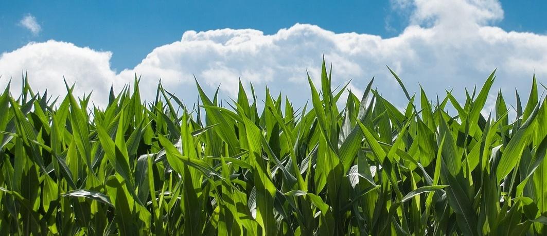 Understanding Farm Financials